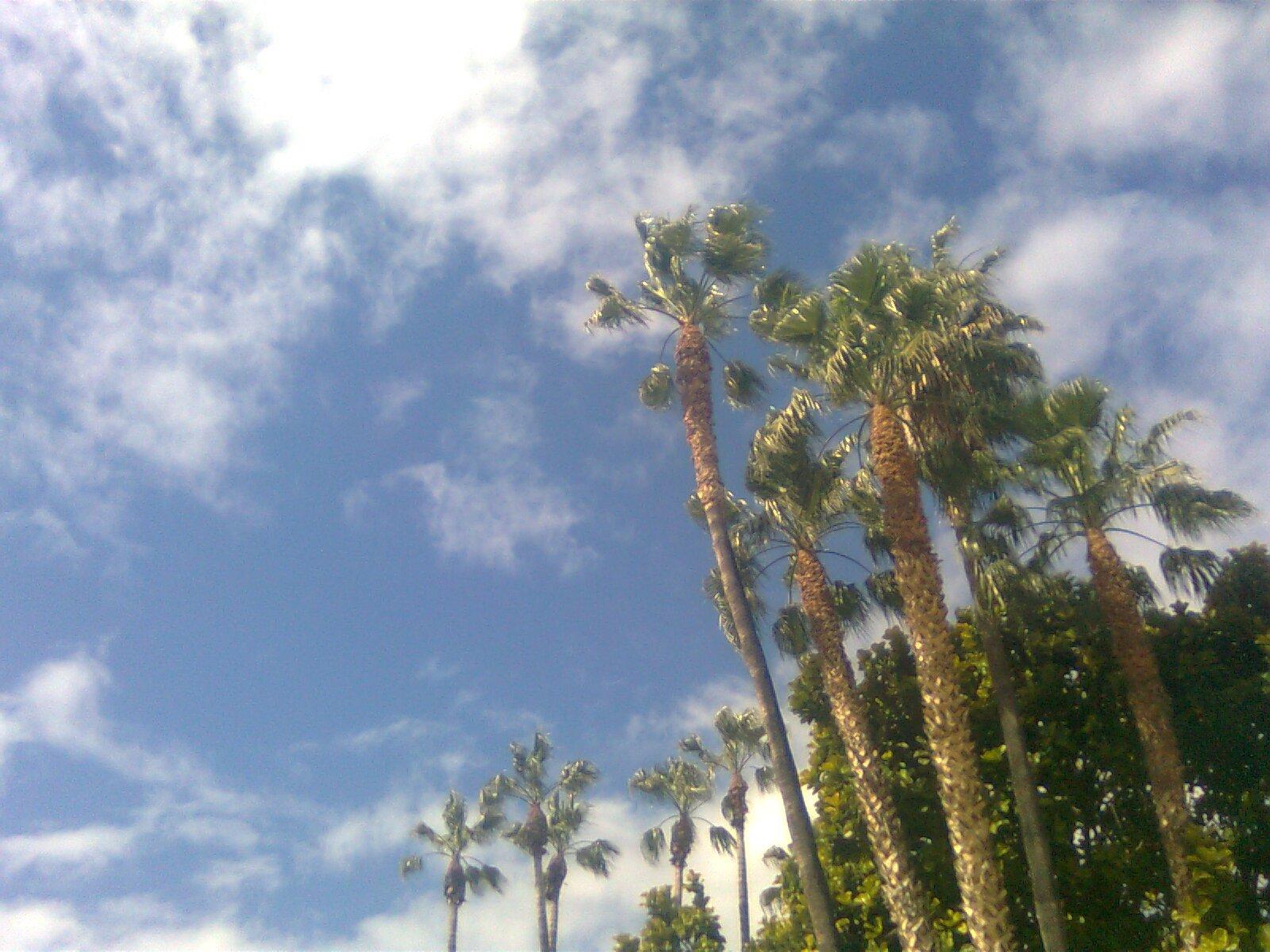 Malaga: Palme al vento nel cielo di Malaga
