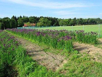 Nopporo Noson Park