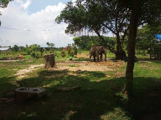 Kasang Kulim Zoo