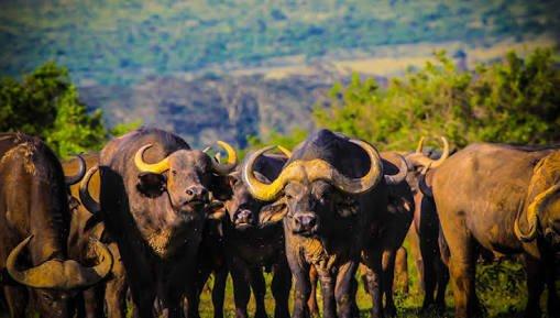 Tanzania Plain Safaris