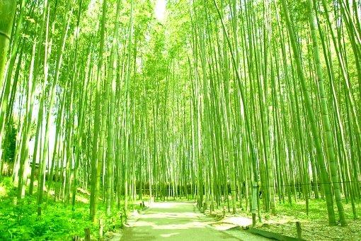 Yume Kyoto Arashiyama