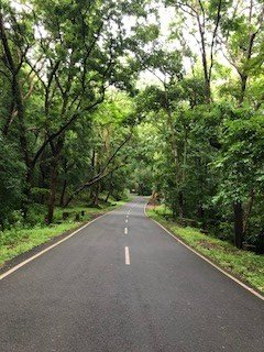 Road to Green Trees Resort