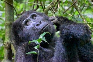 Wild African Safaris