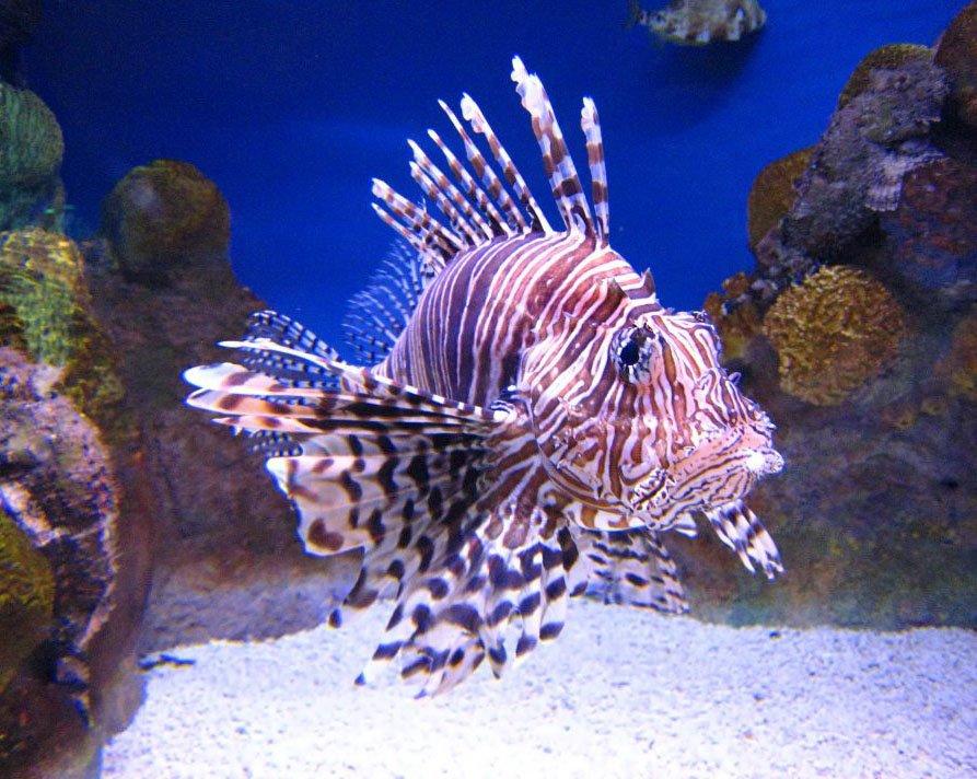 Oceanarium Akvamir