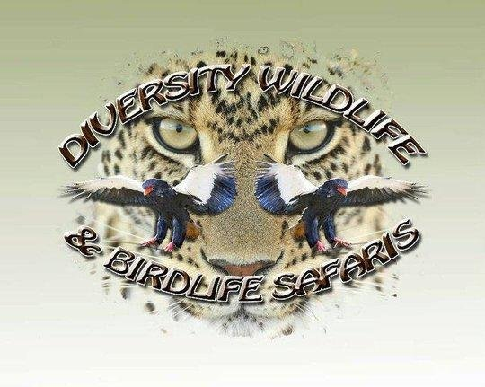 Diversity Wildlife & Bird life Safaris