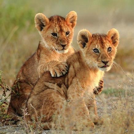 Safari Bliss