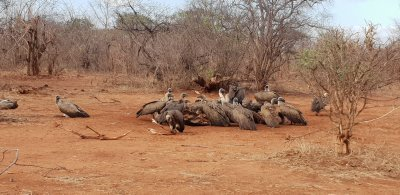 conservation safari in zambezi national park