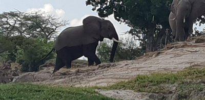 nature walk in zambezi park