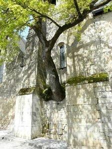 Chêne de l'Église