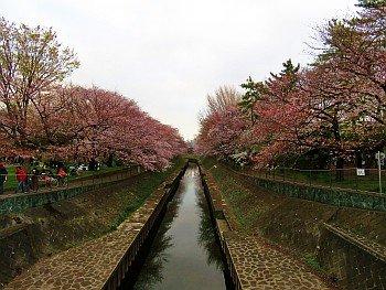 Osaki Bridge