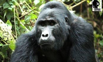 Gorillas In Paradise Safaris