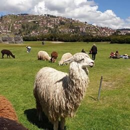 CUSCO AND MACHUPICCHU WITH FRIENDS AND FAMILY ALL IN PRIVATE SERVICE.
