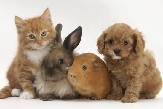 Pets Pantry