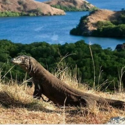 Komodo national park In rinca island