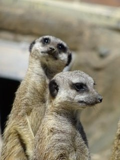 Decembre 2019 zoo de Wellington