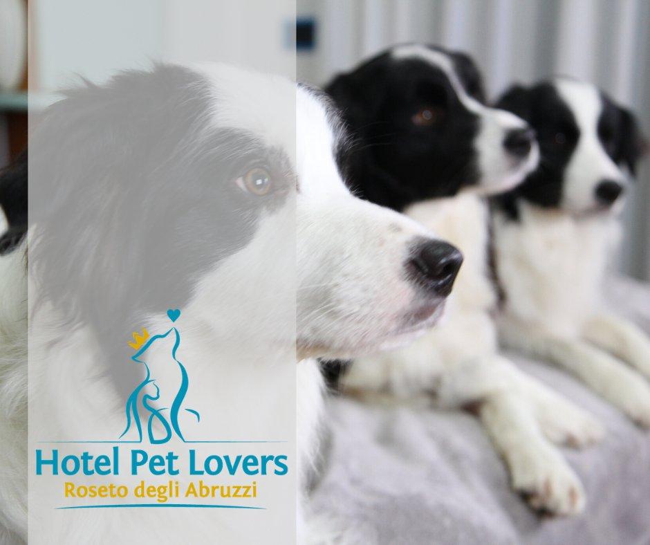 Hotel Marina Pet Lovers
