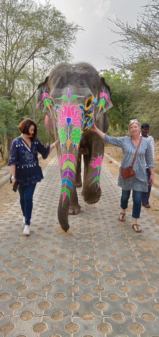 Walk with elephants in elephant village Jaipur ....