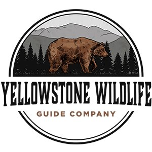 Yellowstone Wildlife Guide Company