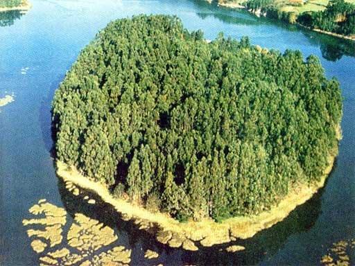 Illa de San Martino