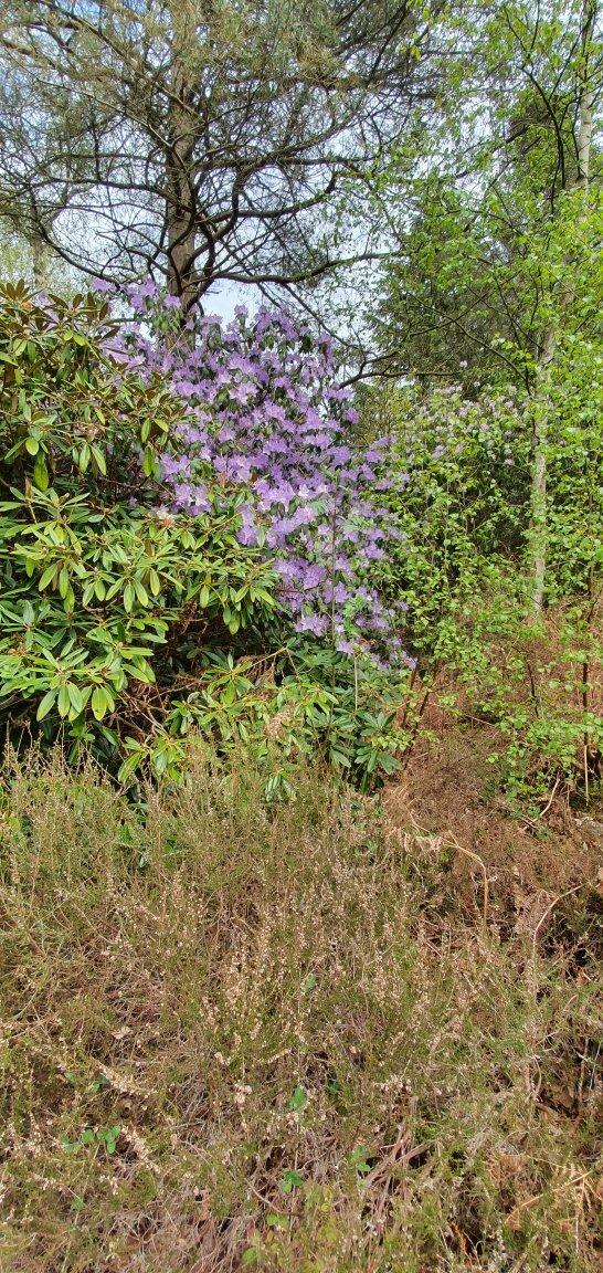 Reuthe's Lost Gardens of Sevenoaks