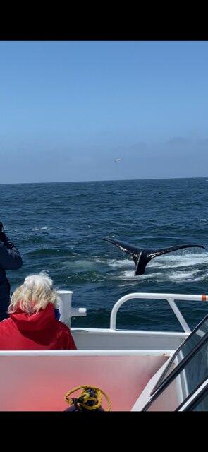 beautiful humpback tail!