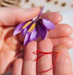 La précieuse fleur de safran