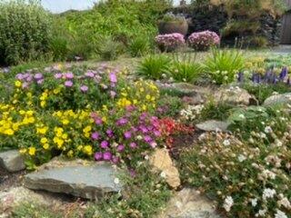 St Davids Plant & Garden Nursery