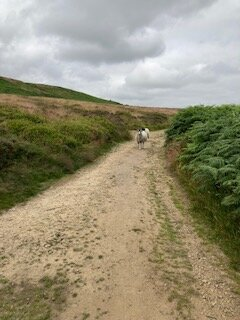 Fellow walkers on the Yorkshire Moors!
