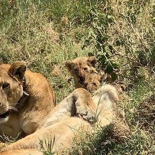 Prime Safaris & Tours