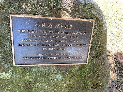 Finlay Avenue Elms