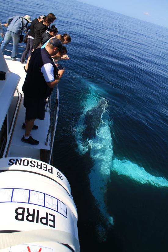 whale watching wollongong - photo#13