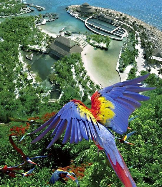 Occidental Grand Xcaret Amp Royal Club Mexico Riviera Maya
