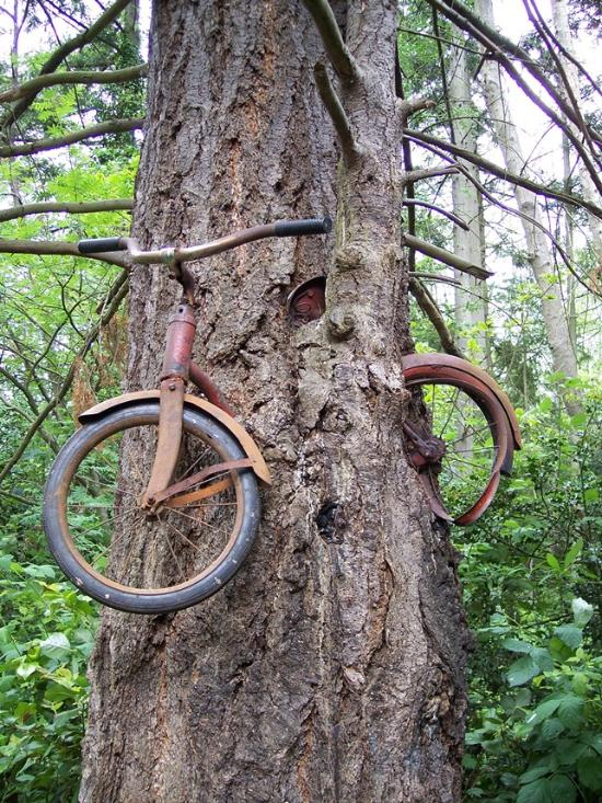 Things To Do in Old Bicycle in the Tree, Restaurants in Old Bicycle in the Tree