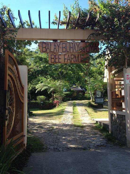 Balay Buhay