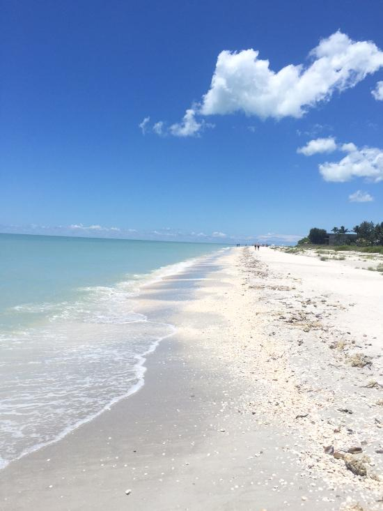 Tarpon Bay Beach Sanibel Island Fl Address Attraction