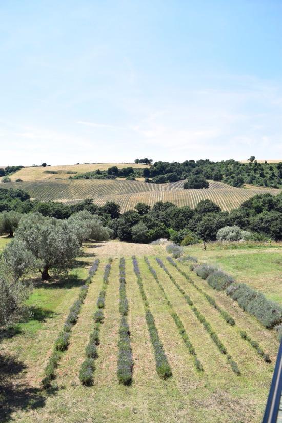 Agriturismo La Piantata