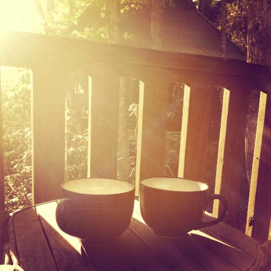 Cheshire Cabin Treehouse Rentals Lodge Reviews Black