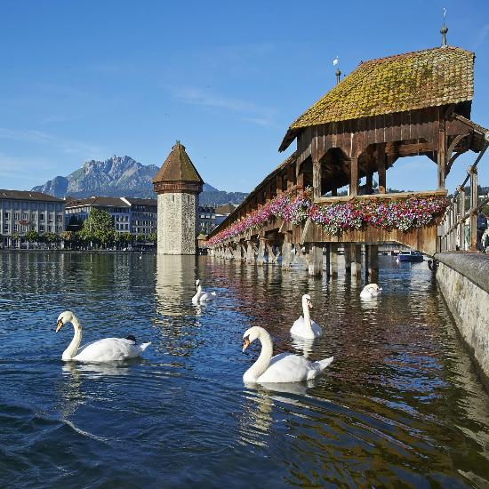 What To Do In Lucerne  TripAdvisor