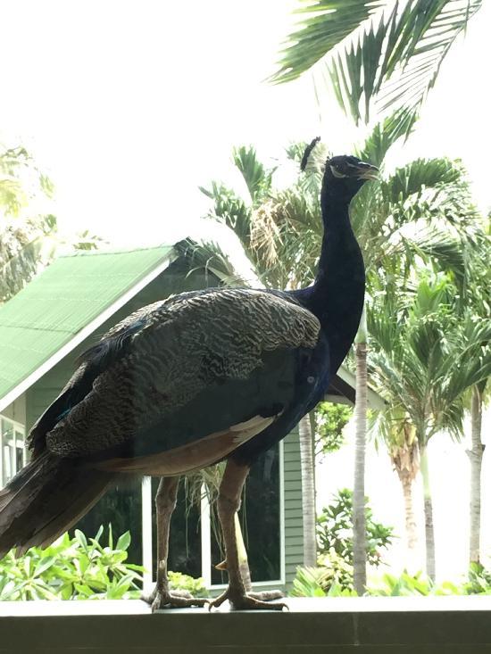 Rawa Island Resort Mersing See 244 Reviews And 384