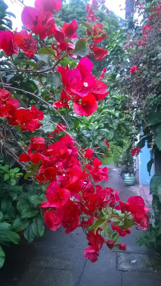 Hotel El Jardin de Lolita