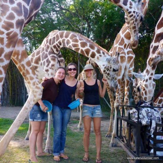 Safari Park Open Zoo (Kanchanaburi, Thailand) - Beoordelingen