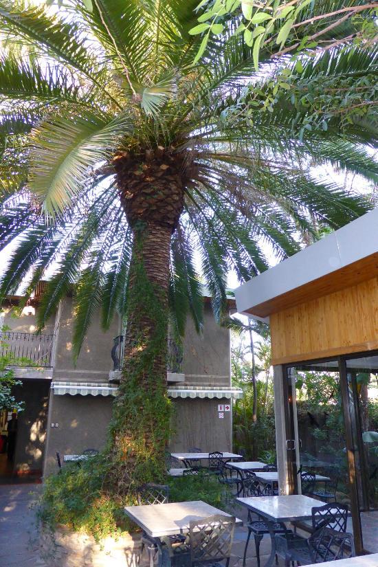 Geschwindigkeit von Palmquellen ca utah dating Schutzauftrag