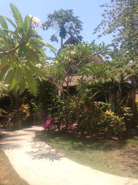 Coconut Dream Bungalows