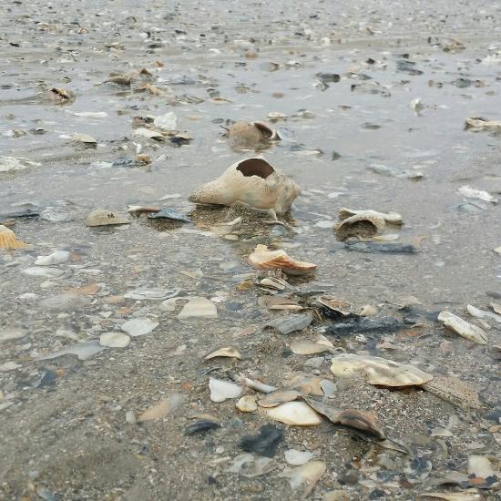 Island Beach State Park: Edisto Beach State Park (Edisto Island, SC): Top Tips