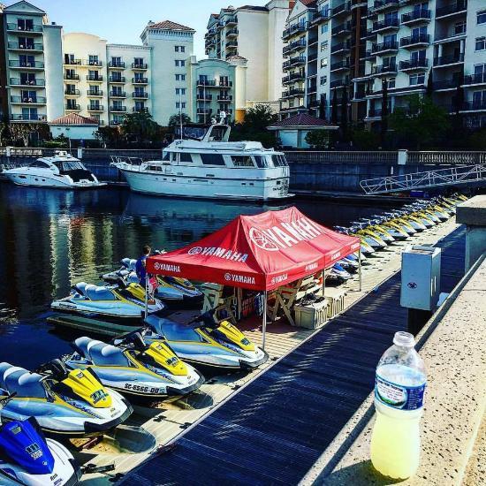 Dolphin Tours Myrtle Beach Sc Reviews