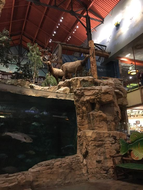 bass pro shops broken arrow 2020 all you need to know before you go with photos tripadvisor bass pro shops broken arrow 2020