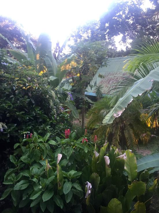The Turtle Garden