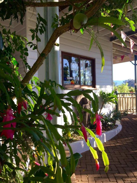 Bellingen YHA - Belfry Guesthouse