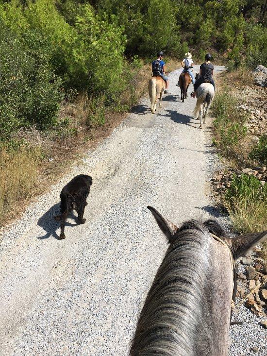 Orfe Horse Riding Club
