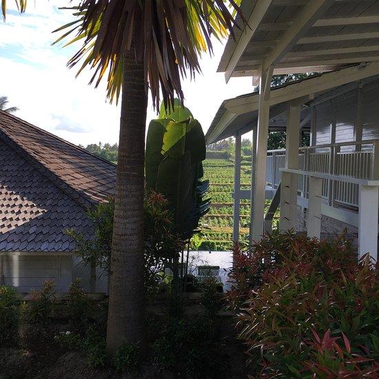 Villa le jardin de bali sukawati indon sie voir les for Les jardins de bali